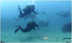 She dives 2014